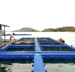 WEIDACAGE III Innovative Systems for Aquaculture – WII